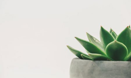Una planta de interior